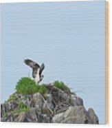 Osprey Sitting On A Ledge In Casco Bay  Wood Print