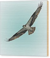 Osprey Soar 2 Wood Print
