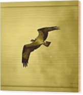 Osprey Soaring Into Golden Sunlight Wood Print