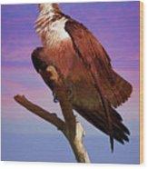 Osprey Solo Wood Print