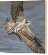 Osprey Take-out Wood Print