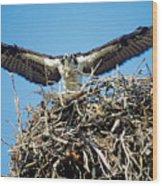 Osprey Wingspan Wood Print