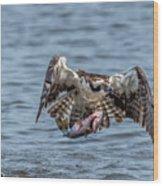 Osprey With Catch 9108 Wood Print