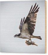 Osprey With Fish 8138 Wood Print