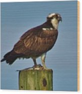 Osprey With His Catch Wood Print