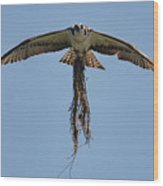 Osprey With Nesting Material 031620161500 Wood Print