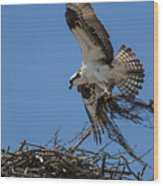 Osprey With Nesting Material 031620161567 Wood Print
