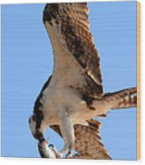 Osprey's Catch Wood Print