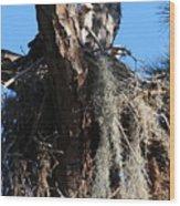 Ospreys In Spanish Moss Nest Wood Print