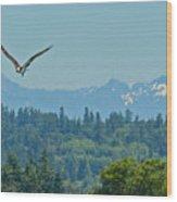 Ospry Flight Wood Print
