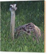 Ostrich Chick Wood Print