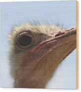Ostrich Head Close Up Wood Print