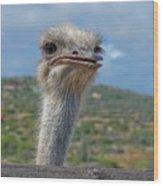 Ostrich Head Wood Print