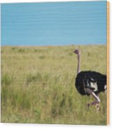 Ostrich On The Run Wood Print