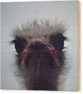 Ostrich - The Sharp End Wood Print