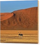 Ostriches At Sossusvlei Wood Print