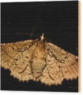 Other Side Of The Moth On The Window Wood Print