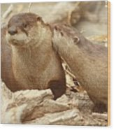 Otter Affection ... Montana Art Photo  Wood Print