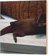 Otter Like It Wood Print