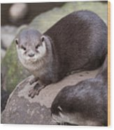 Otters In Arms Wood Print