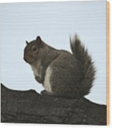 Our Squirrel Chubby Wood Print