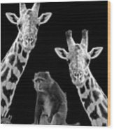 Our Wise Little Friend - Monkey And Giraffes In Black And White Wood Print