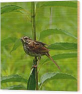 Out For Lunch Wood Print