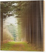 Out Of Woods Wood Print