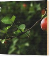 Out On A Limb  A Tempting Photograph Of A Tasty Ripe Red Apple On A Tree  Wood Print
