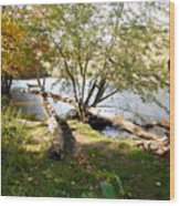 Outdoors Along The Huron River Wood Print