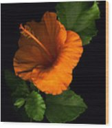 Outrageous Orange Wood Print
