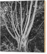 Outstretched Wood Print