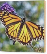 Outstretched Monarch Wood Print
