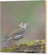 Ovenbird Wood Print