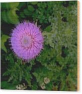 Over A Thistle Wood Print