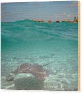 Over-under Water Of A Stingray At Bora Bora Wood Print