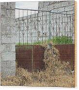 Overgrown Rusted Gate Wood Print