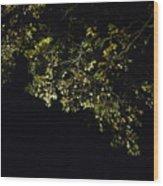 Overhead Branch Wood Print