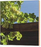 Overhead Grape Harvest - Summertime Dreaming Of Fine Wines Wood Print