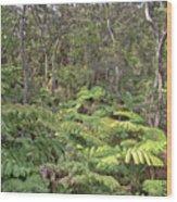 Overlooking The Rainforest Wood Print