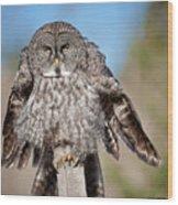 Owl 4 Wood Print