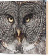 Owl 6 Wood Print