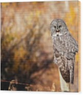 Owl 9 Wood Print