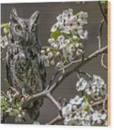 Owl Among The Blossoms Wood Print