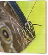 Owl Butterfly In Yellow Flower Wood Print