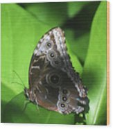 Owl Butterfly On A Cluster Of Green Leaves Wood Print