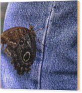 Owl Butterfly On Jeans Wood Print