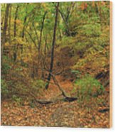 Owl Canyon In Autumn 2 Wood Print