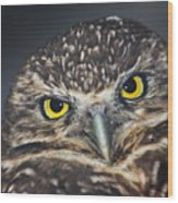 Owl Face To Face Wood Print