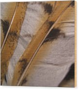 Owl Feathers Photograph Wood Print